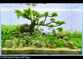 Sometimes You Just Have To Find A Hobby Aquascaping The Lalai Land